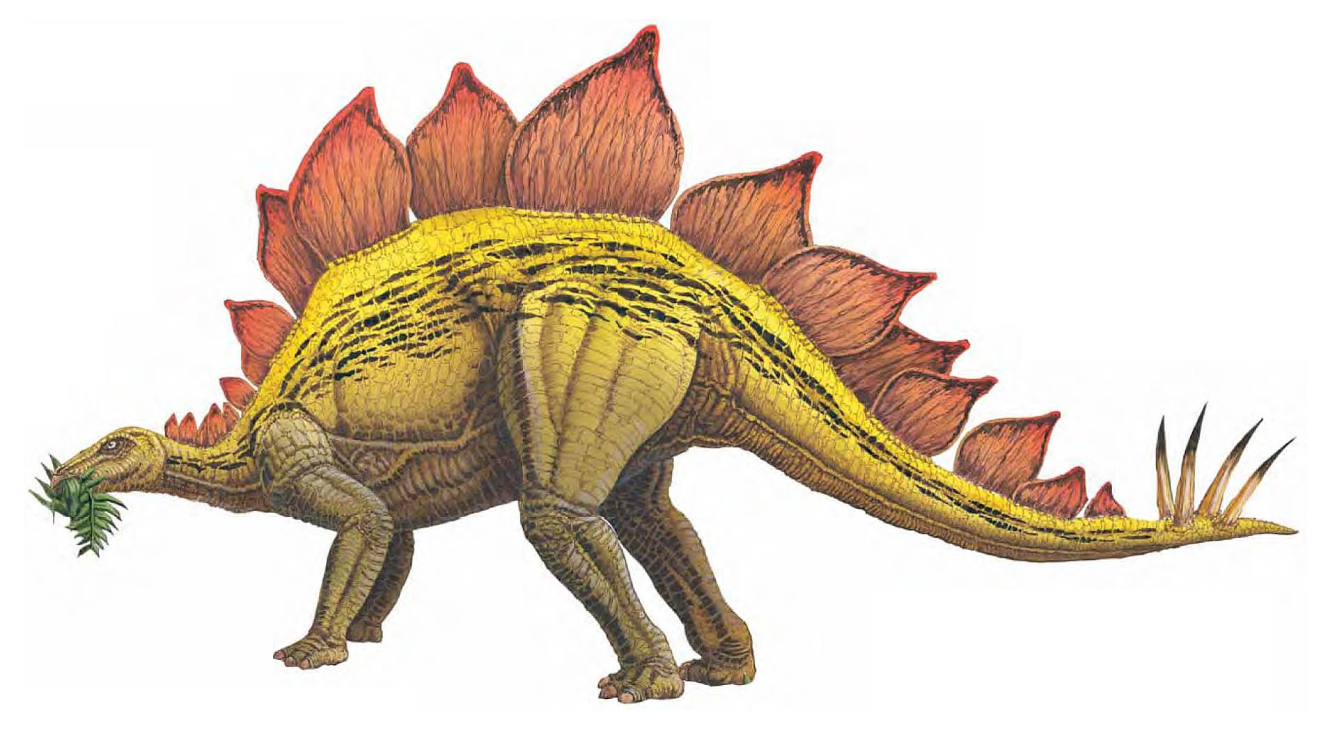 Images of Stegosaurus   1920x1053