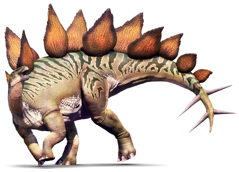 Nice wallpapers Stegosaurus 1440x1036px