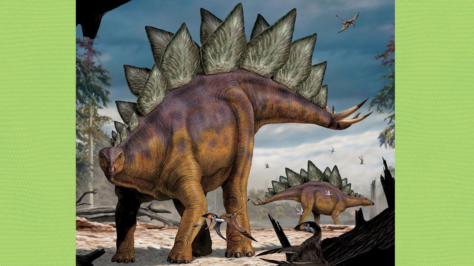 HQ Stegosaurus Wallpapers   File 316.69Kb