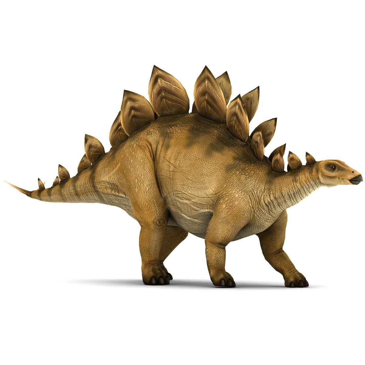 HQ Stegosaurus Wallpapers   File 189.92Kb