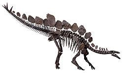 HQ Stegosaurus Wallpapers   File 8.22Kb