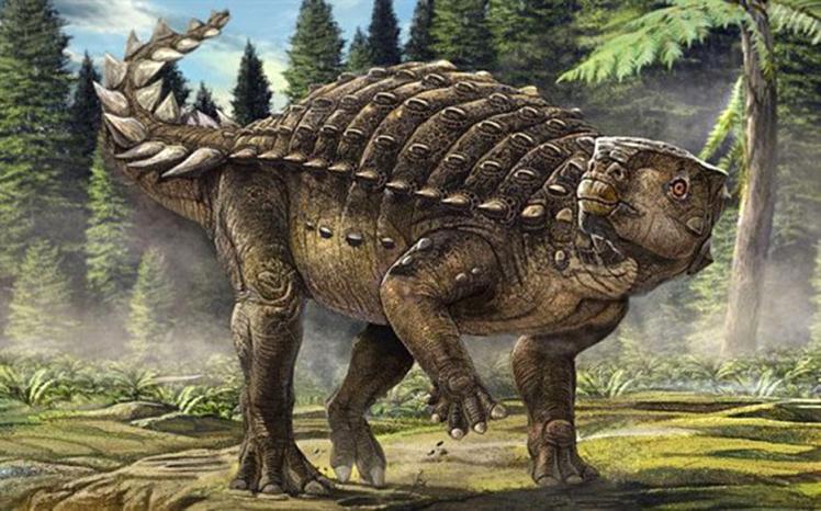 HD Quality Wallpaper   Collection: Animal, 748x466 Stegosaurus