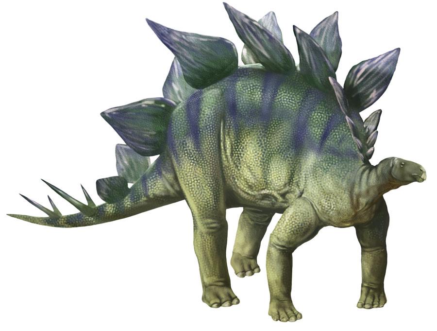Amazing Stegosaurus Pictures & Backgrounds