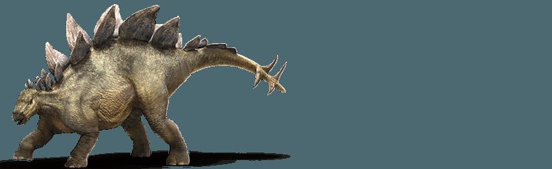 Images of Stegosaurus   800x246