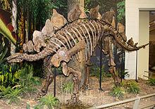 HQ Stegosaurus Wallpapers   File 18.58Kb
