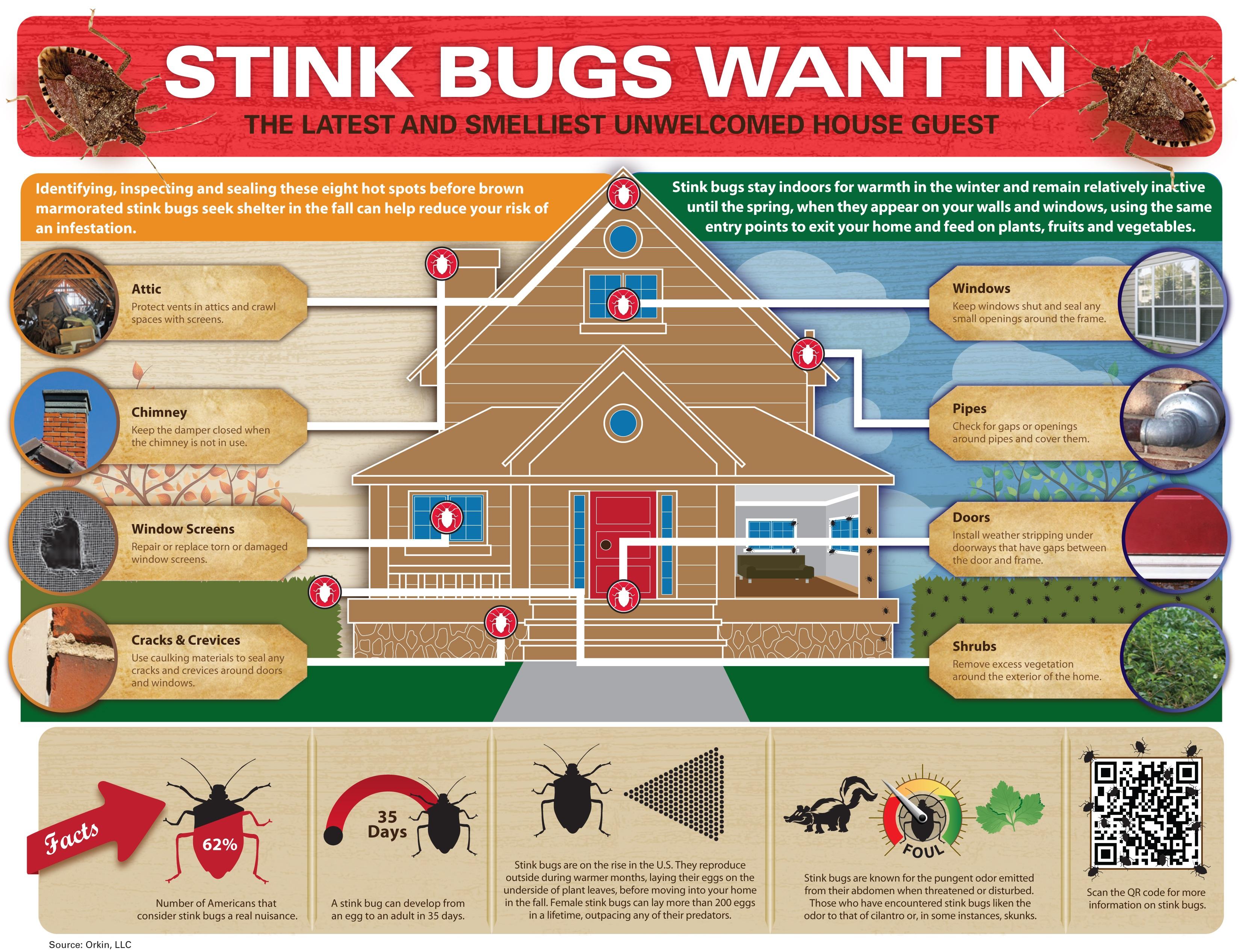 Stink Bug Backgrounds on Wallpapers Vista