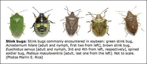 HQ Stink Bug Wallpapers | File 42.05Kb
