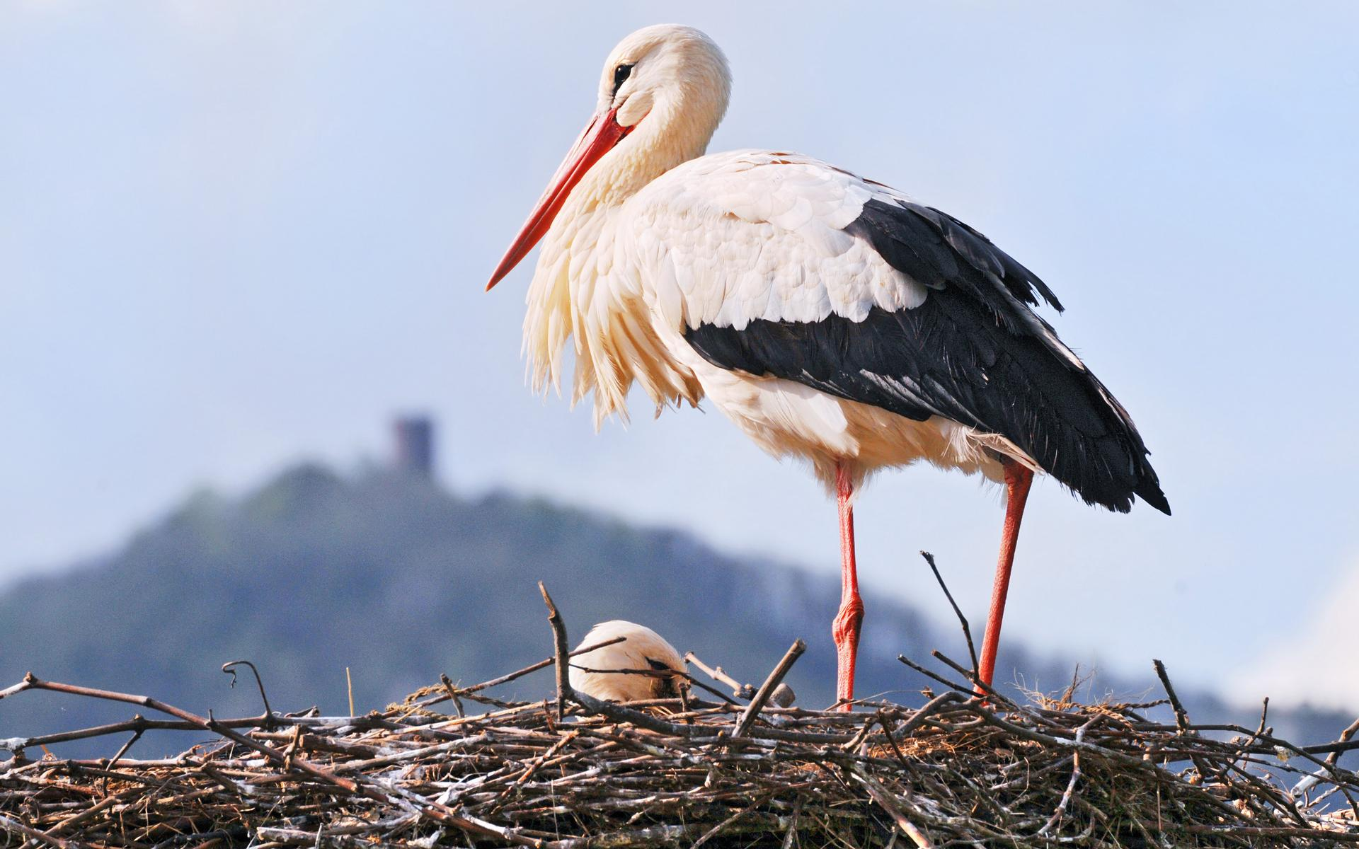 Nice Images Collection: Stork Desktop Wallpapers