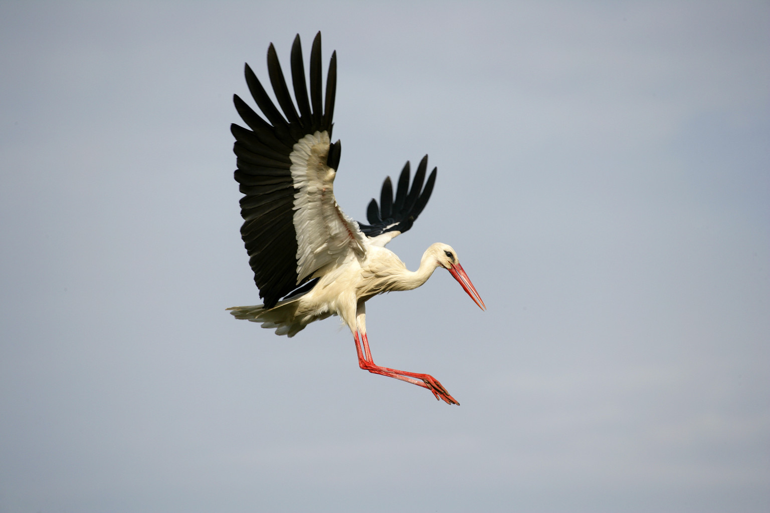Amazing Stork Pictures & Backgrounds