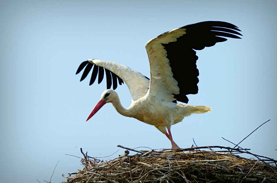 HD Quality Wallpaper | Collection: Animal, 960x636 Stork
