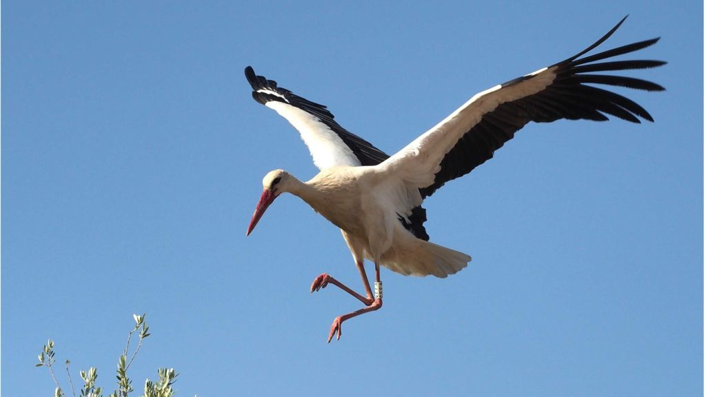 Nice wallpapers Stork 1024x576px