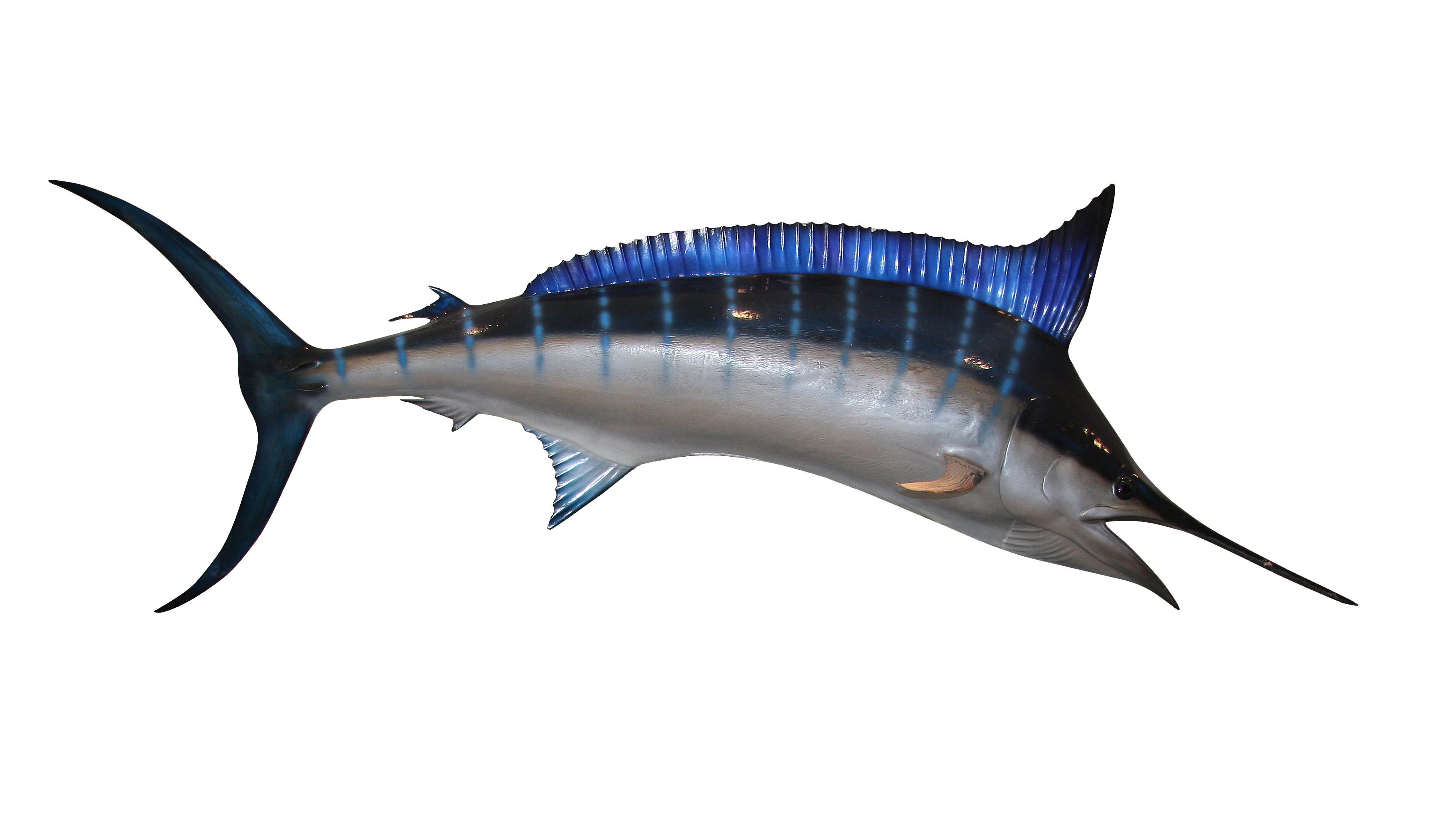 HQ Swordfish Wallpapers | File 1418.57Kb