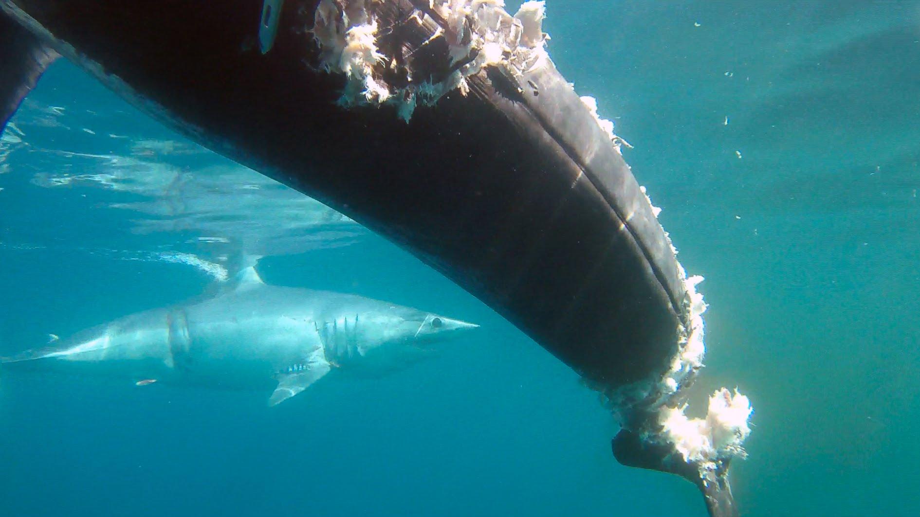 Amazing Swordfish Pictures & Backgrounds