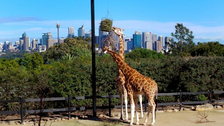 Sydney Backgrounds, Compatible - PC, Mobile, Gadgets| 761x428 px