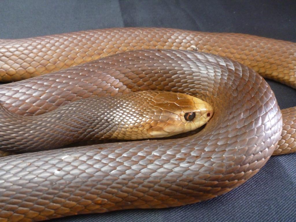 картинки толстых змей того, интервью