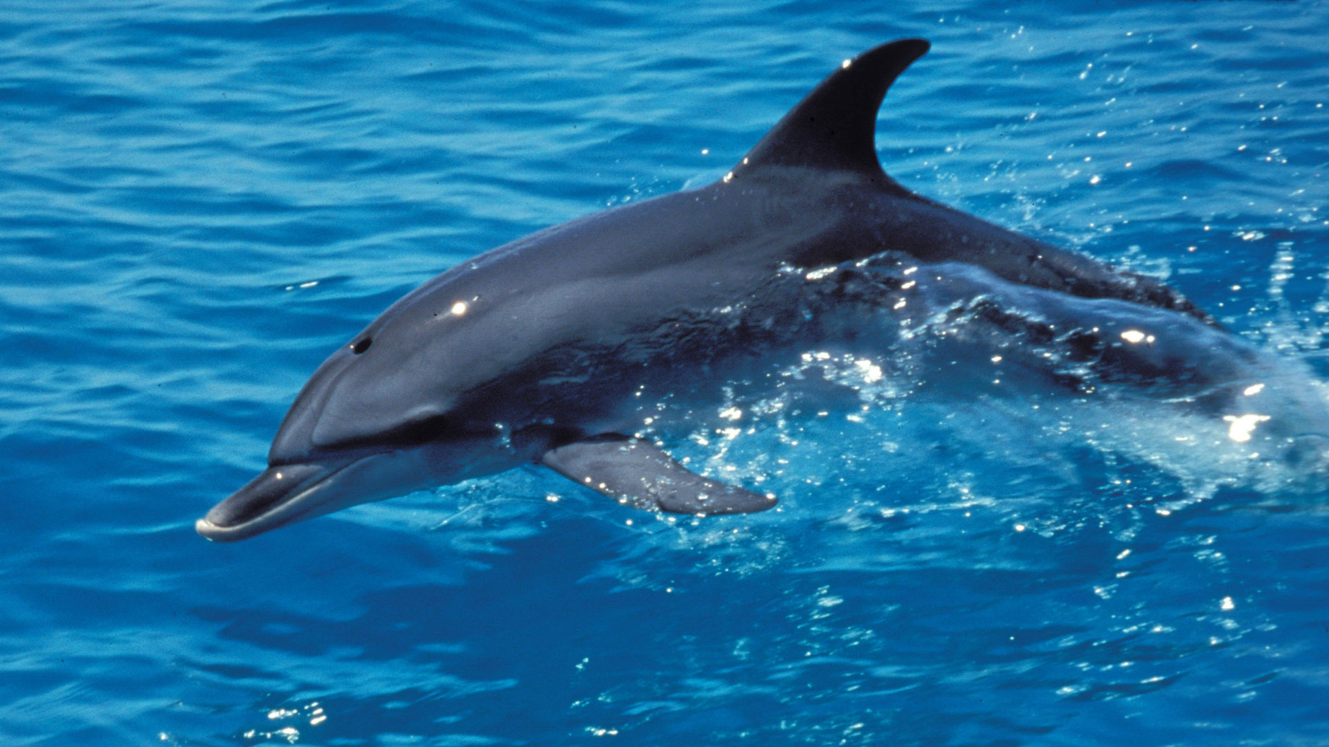 HD Quality Wallpaper   Collection: Cartoon, 1920x1080 The Dolphin