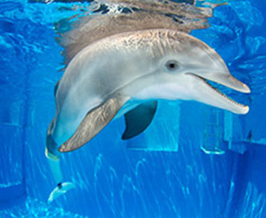 Images of The Dolphin   375x307