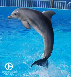 Images of The Dolphin   236x258