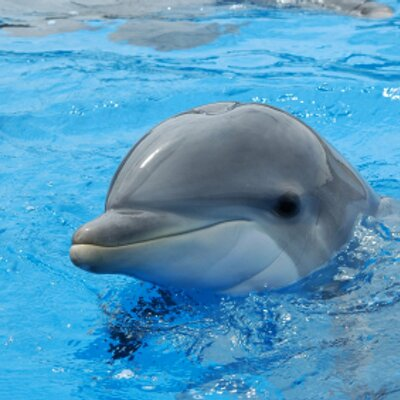 HD Quality Wallpaper   Collection: Cartoon, 400x400 The Dolphin