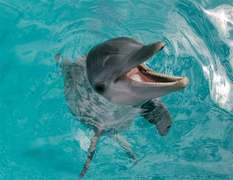 474x366 > The Dolphin Wallpapers