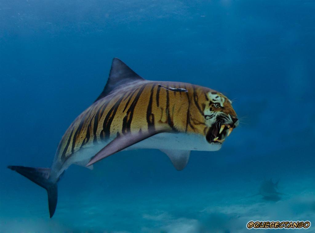 1024x759 > Tiger Shark Wallpapers