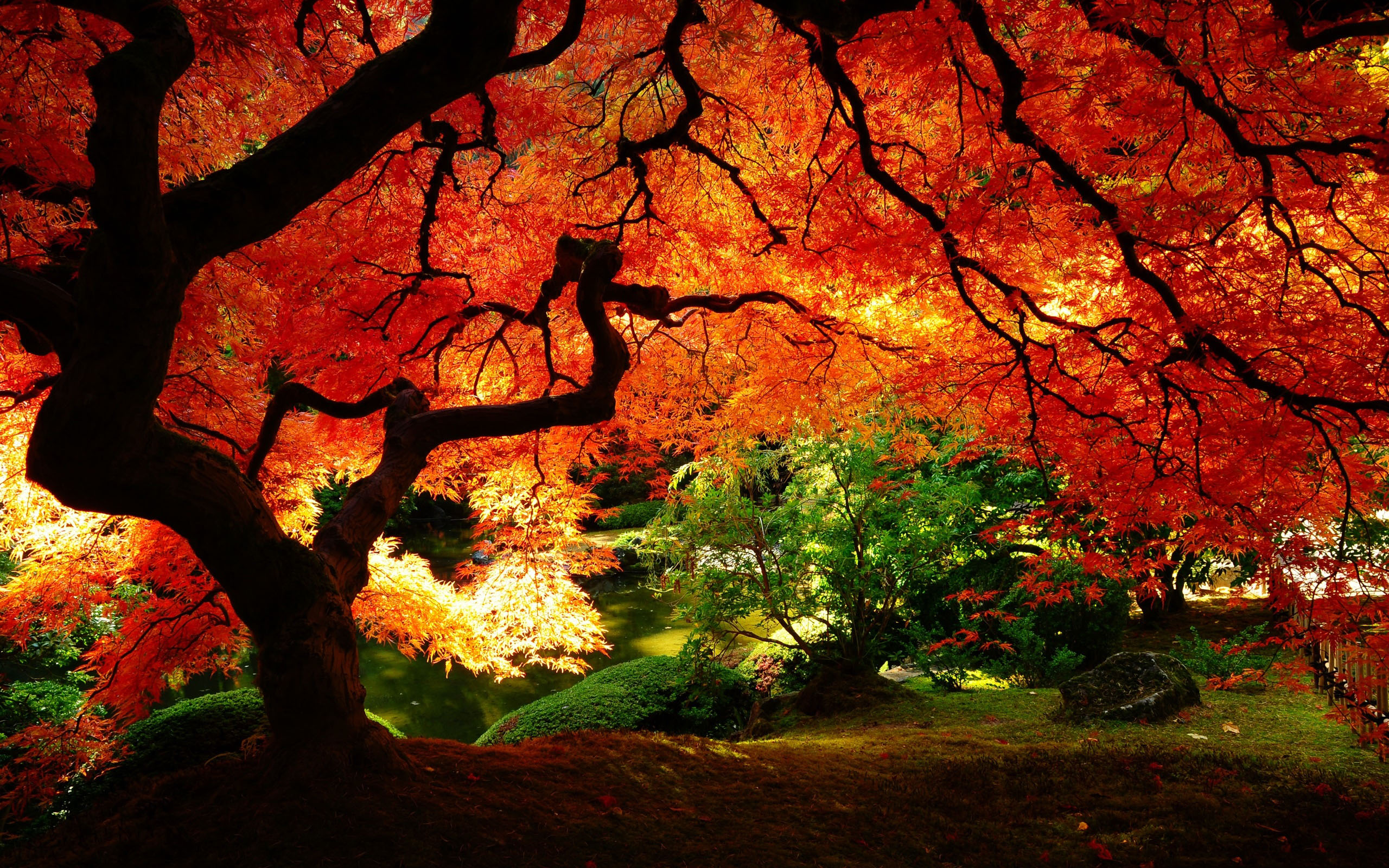 Nice Images Collection: Tree Desktop Wallpapers