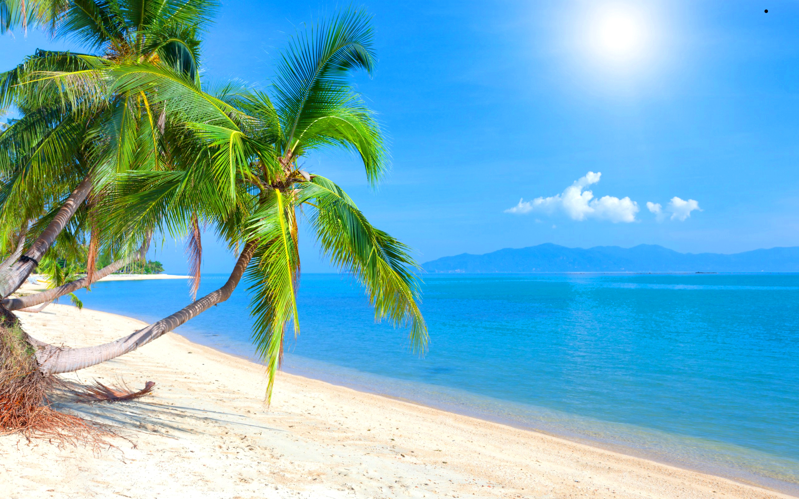 Nice wallpapers Tropical 2560x1600px