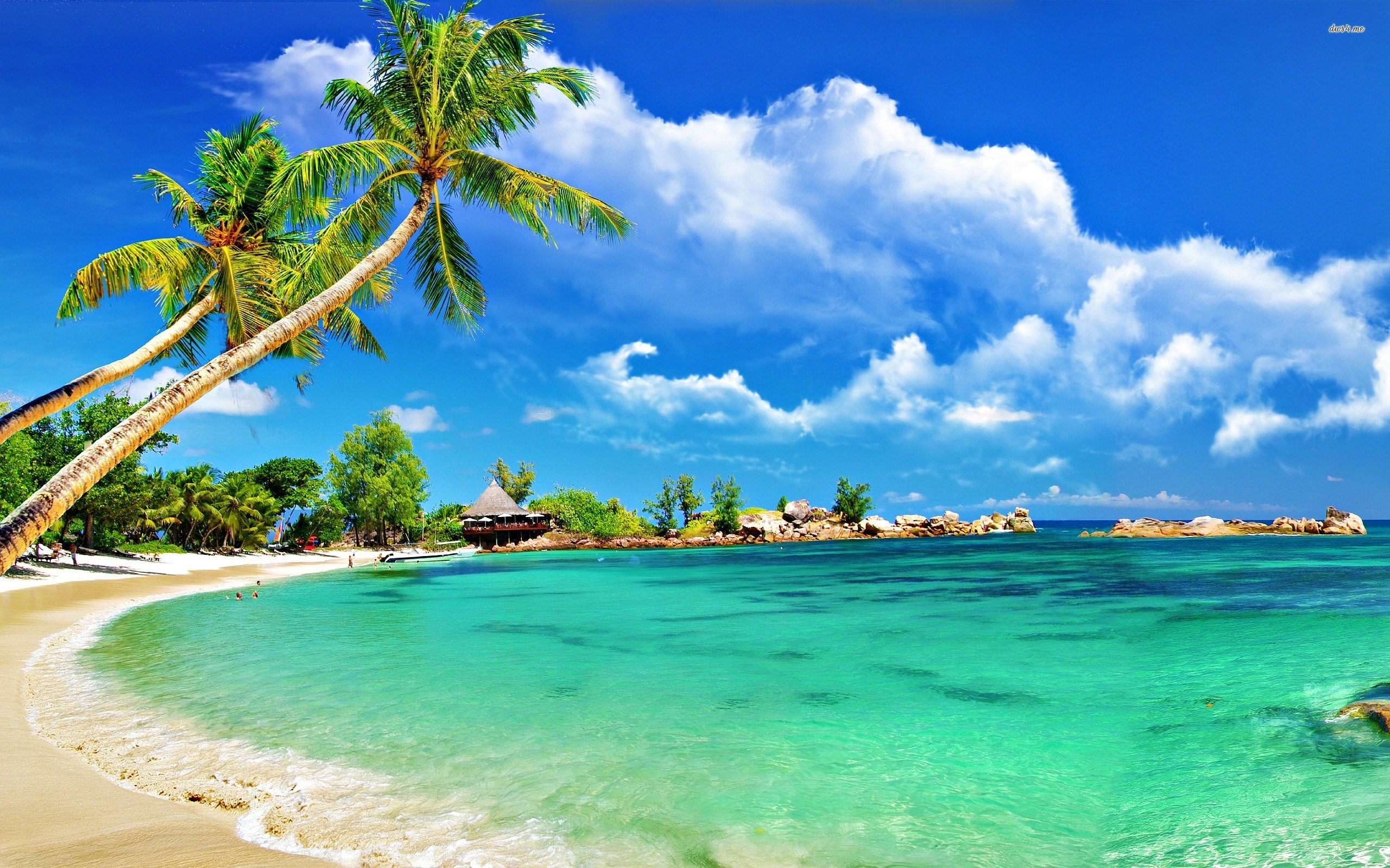 Nice Images Collection: Tropical Desktop Wallpapers