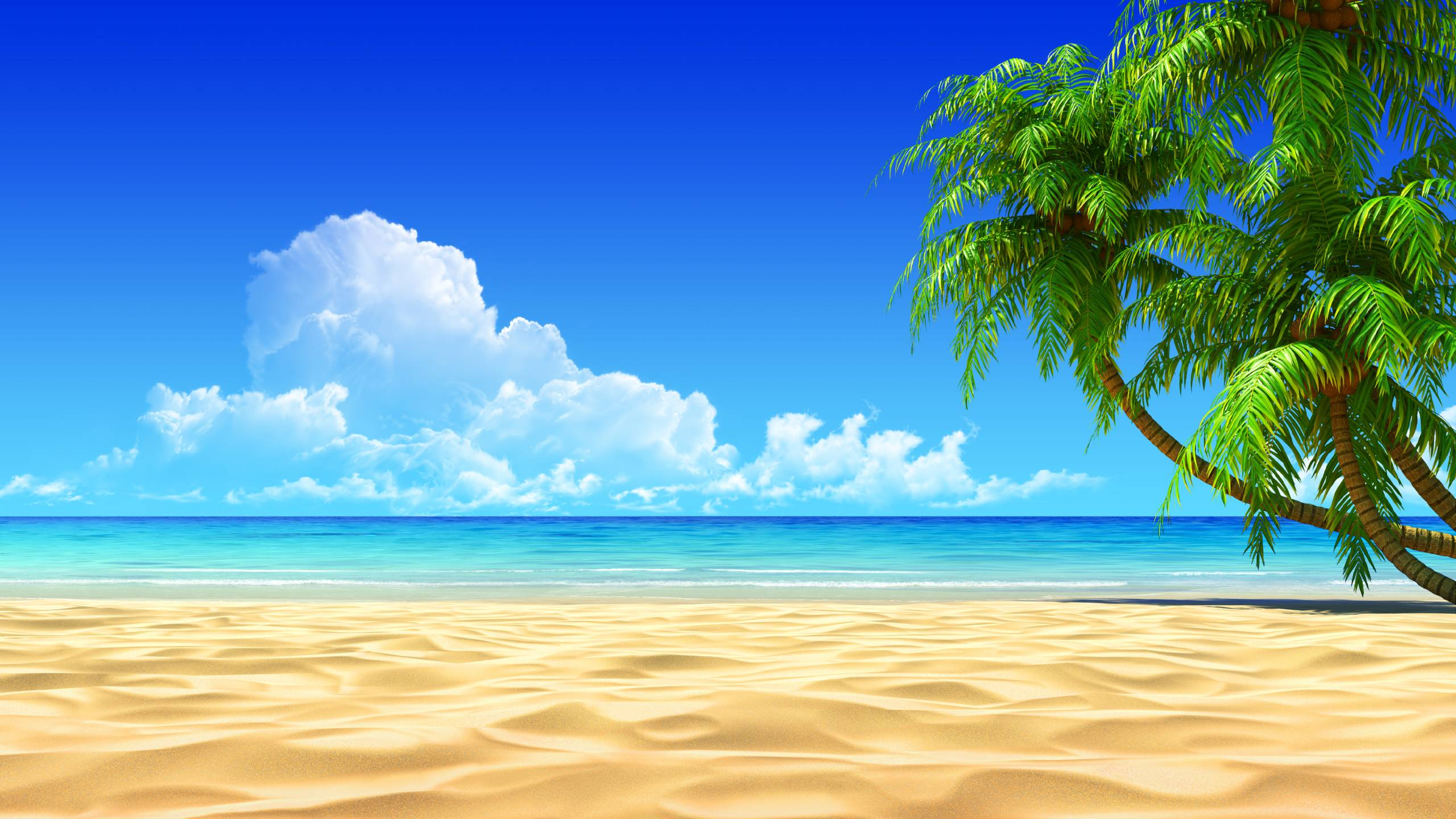 Nice wallpapers Tropical 2560x1440px