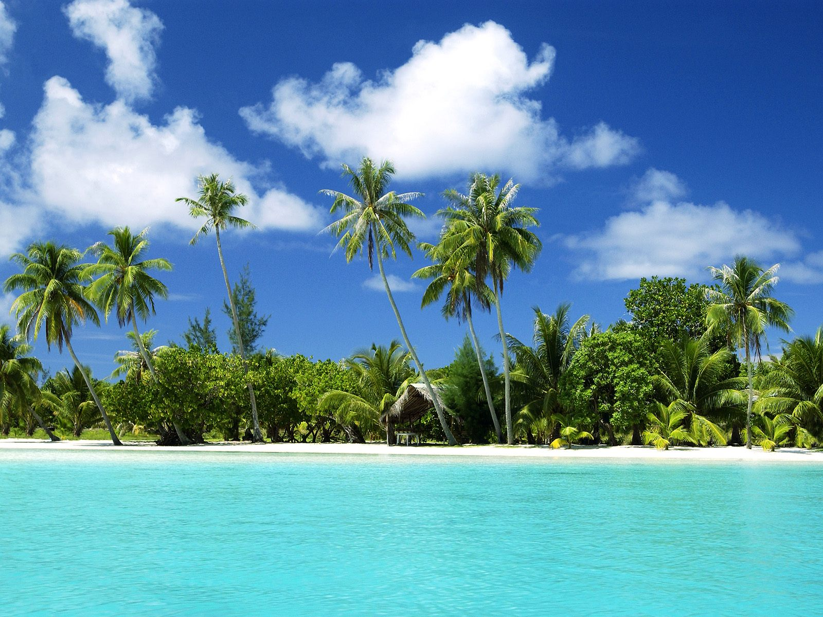 Tropical Backgrounds, Compatible - PC, Mobile, Gadgets| 1600x1200 px