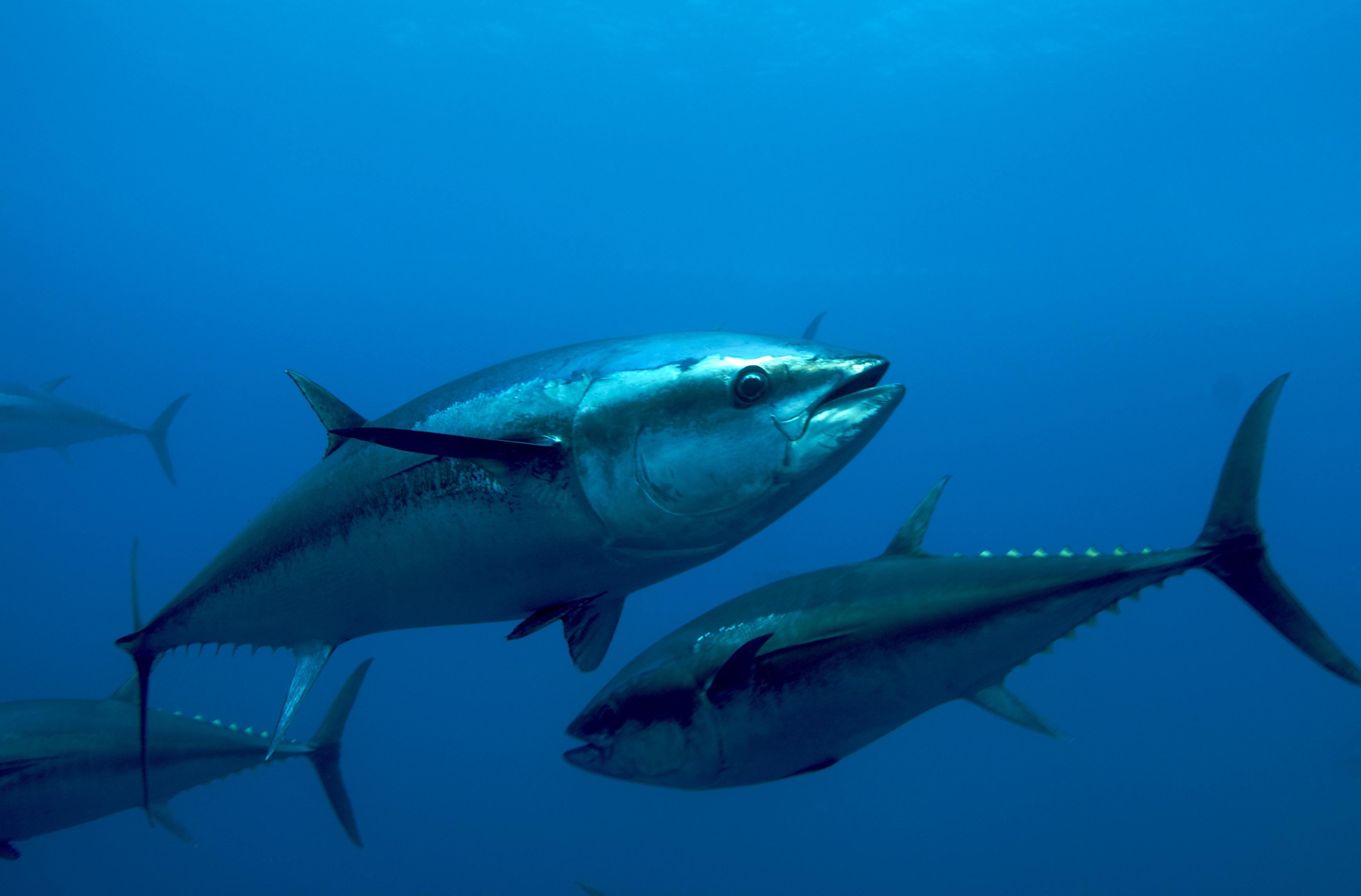 fish4u társkereső randevú keresés newcastle
