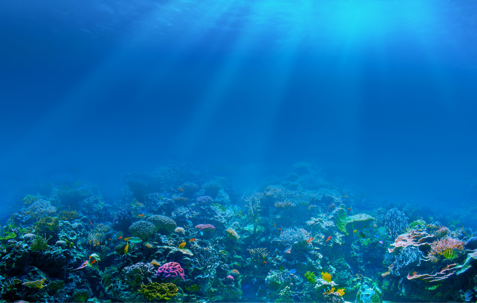 HD Quality Wallpaper | Collection: Photography, 2000x1272 Underwater