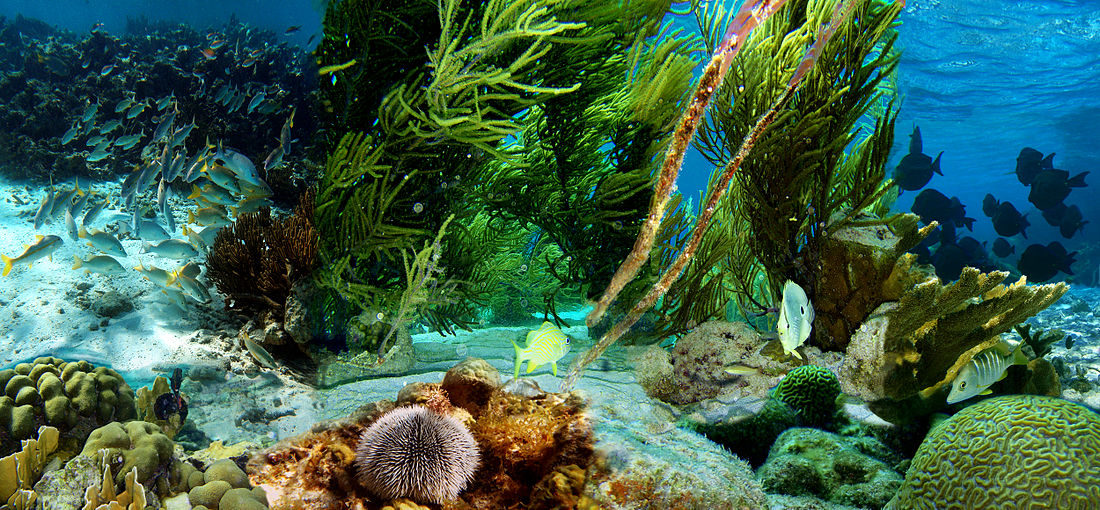 HD Quality Wallpaper | Collection: Photography, 1100x510 Underwater