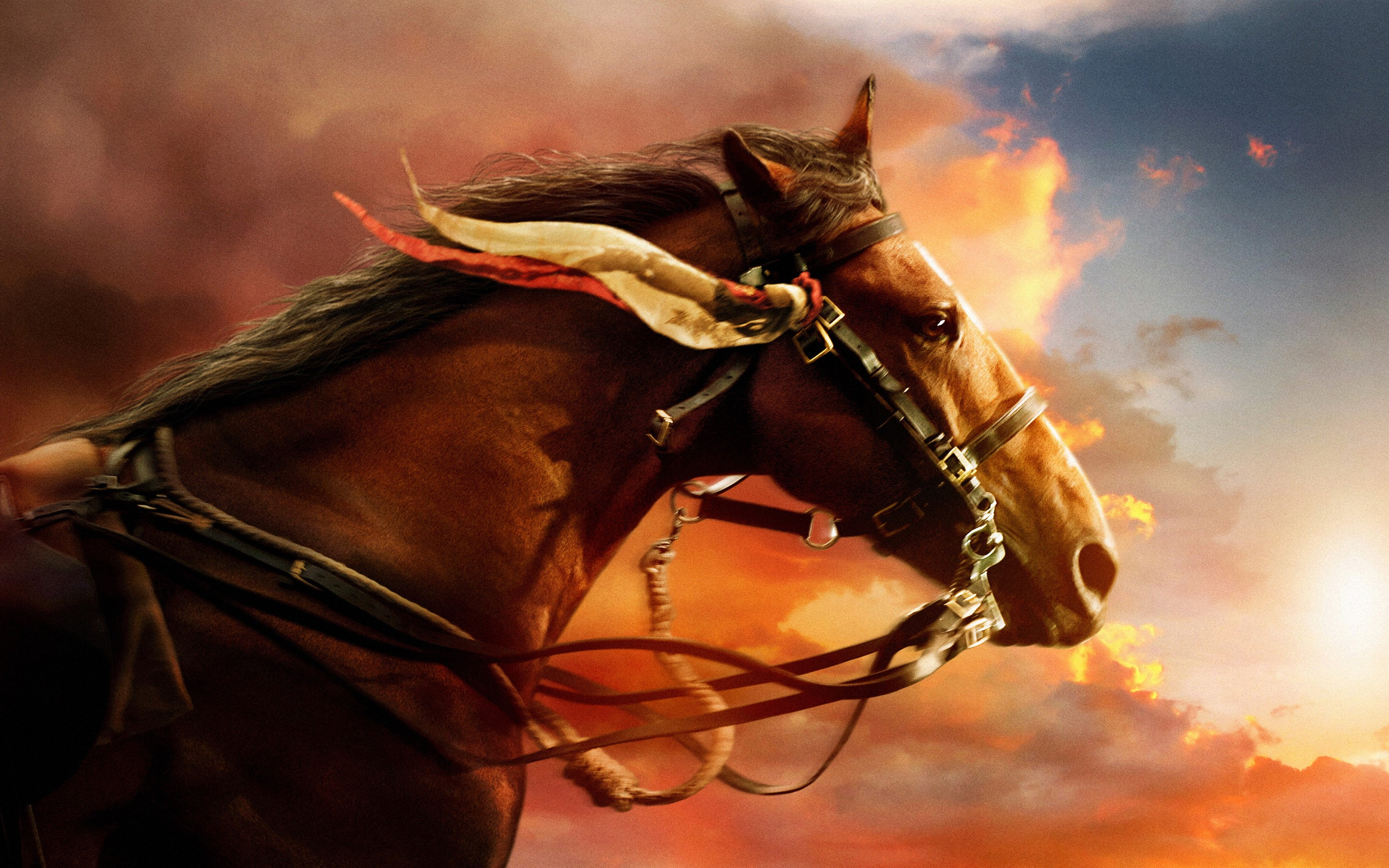 Amazing War Horse Pictures & Backgrounds