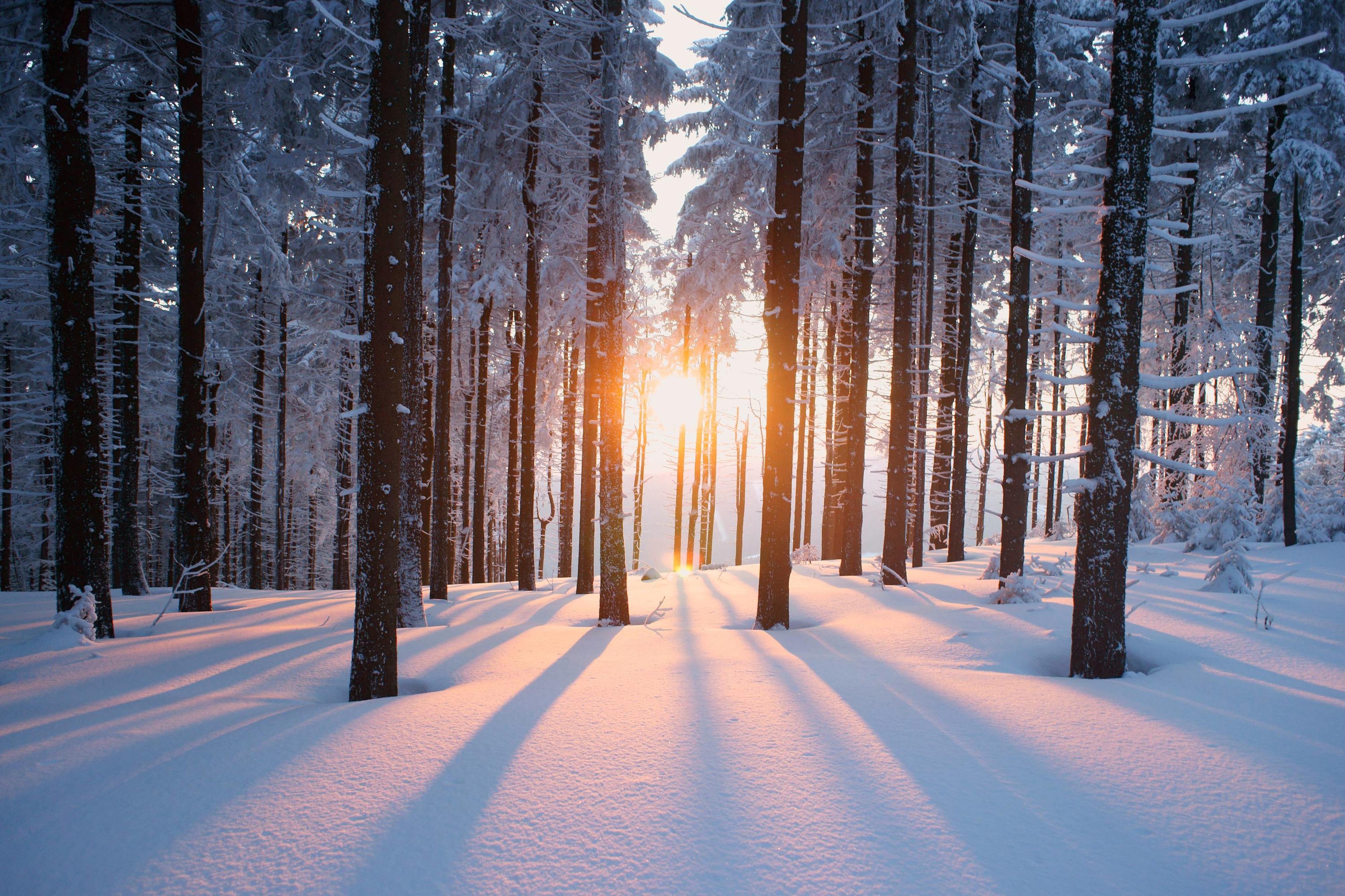 Winter Backgrounds, Compatible - PC, Mobile, Gadgets| 4000x2666 px