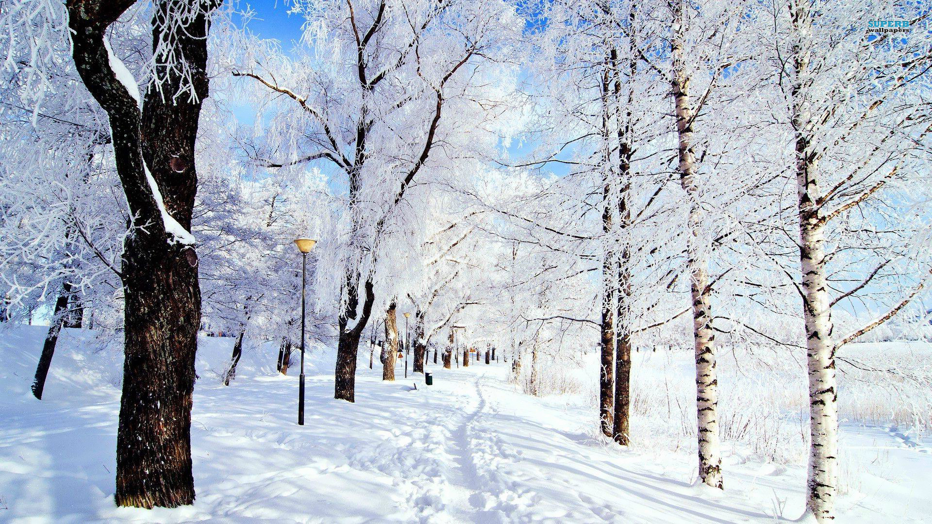 HD Quality Wallpaper   Collection: Artistic, 1920x1080 Winter