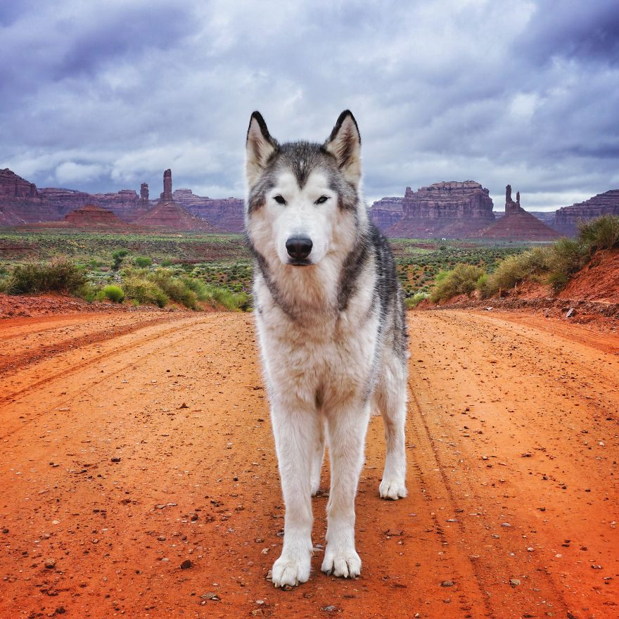 880x880 > Wolfdog Wallpapers