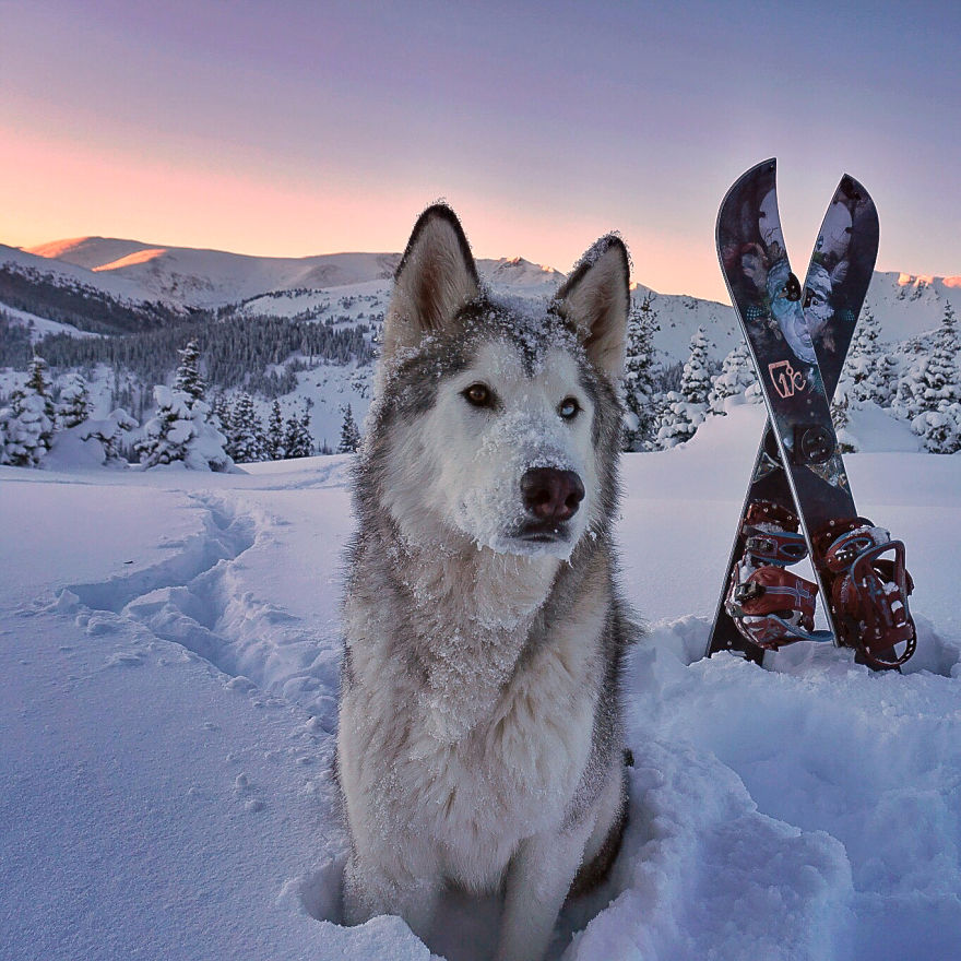 HQ Wolfdog Wallpapers | File 176.31Kb