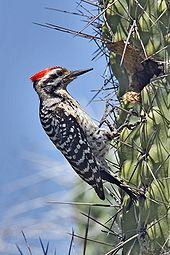 Images of Woodpecker | 170x255