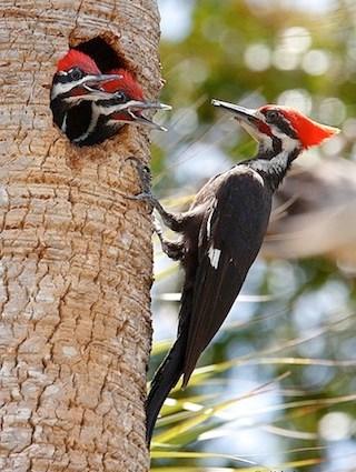 Woodpecker Backgrounds, Compatible - PC, Mobile, Gadgets| 320x425 px