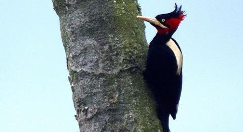 Woodpecker Backgrounds on Wallpapers Vista