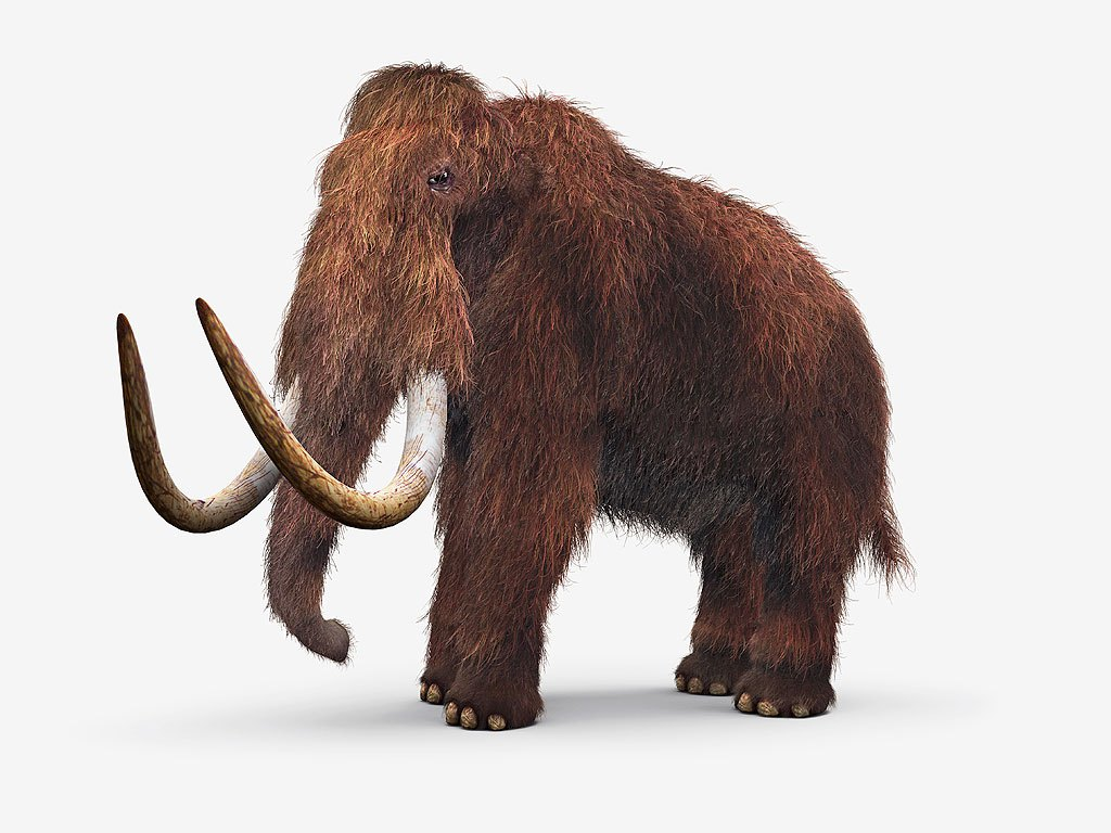 Woolly Mammoth High Quality Background on Wallpapers Vista