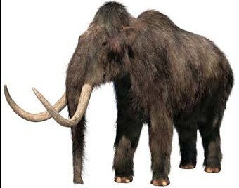 HQ Woolly Mammoth Wallpapers | File 20.69Kb