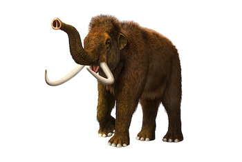 Woolly Mammoth Pics, Animal Collection