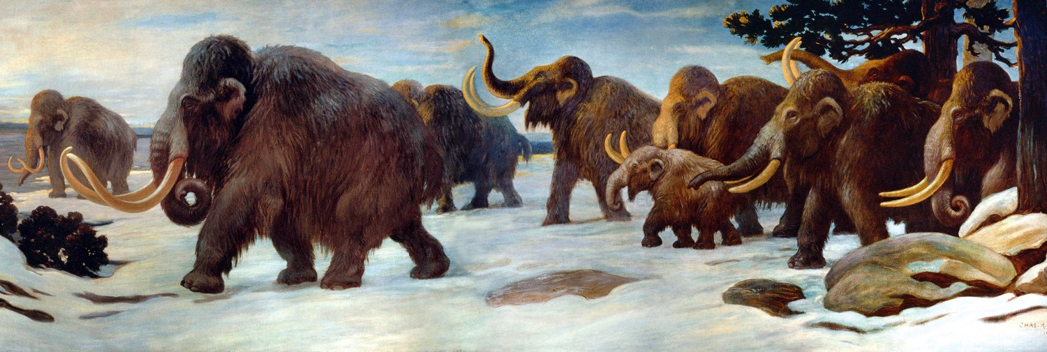 Woolly Mammoth Backgrounds, Compatible - PC, Mobile, Gadgets| 1500x505 px