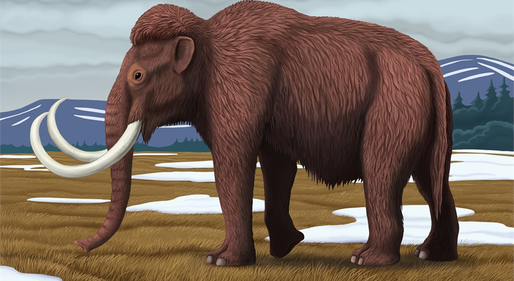 Amazing Woolly Mammoth Pictures & Backgrounds