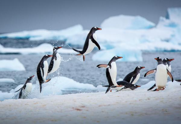 preview Antarctica