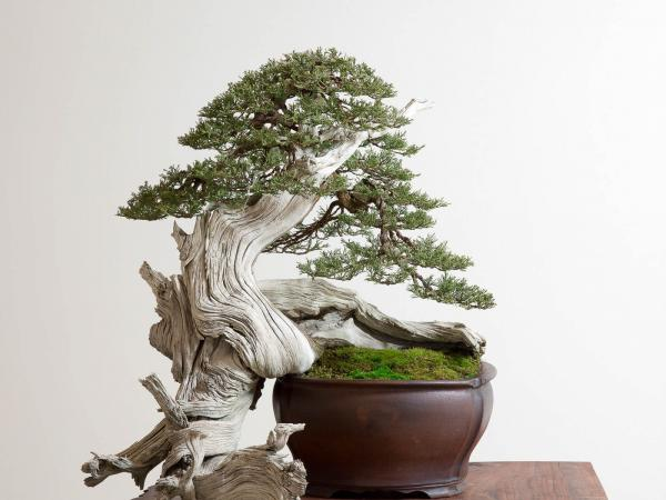 preview Bonsai