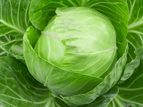preview Cabbage