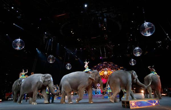 preview Circus